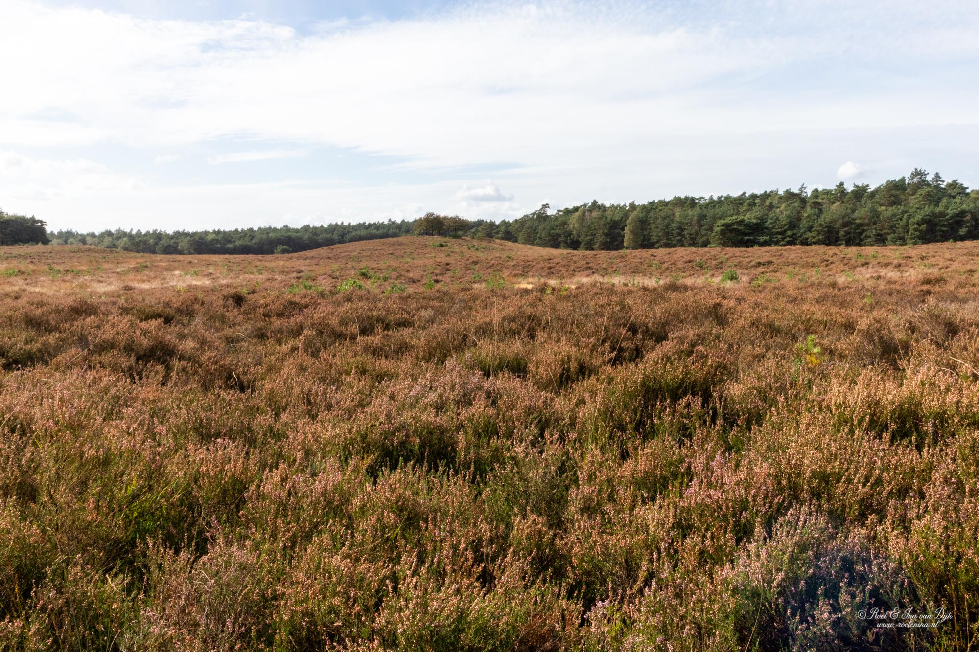 Uitzicht over de Tongerse Heide