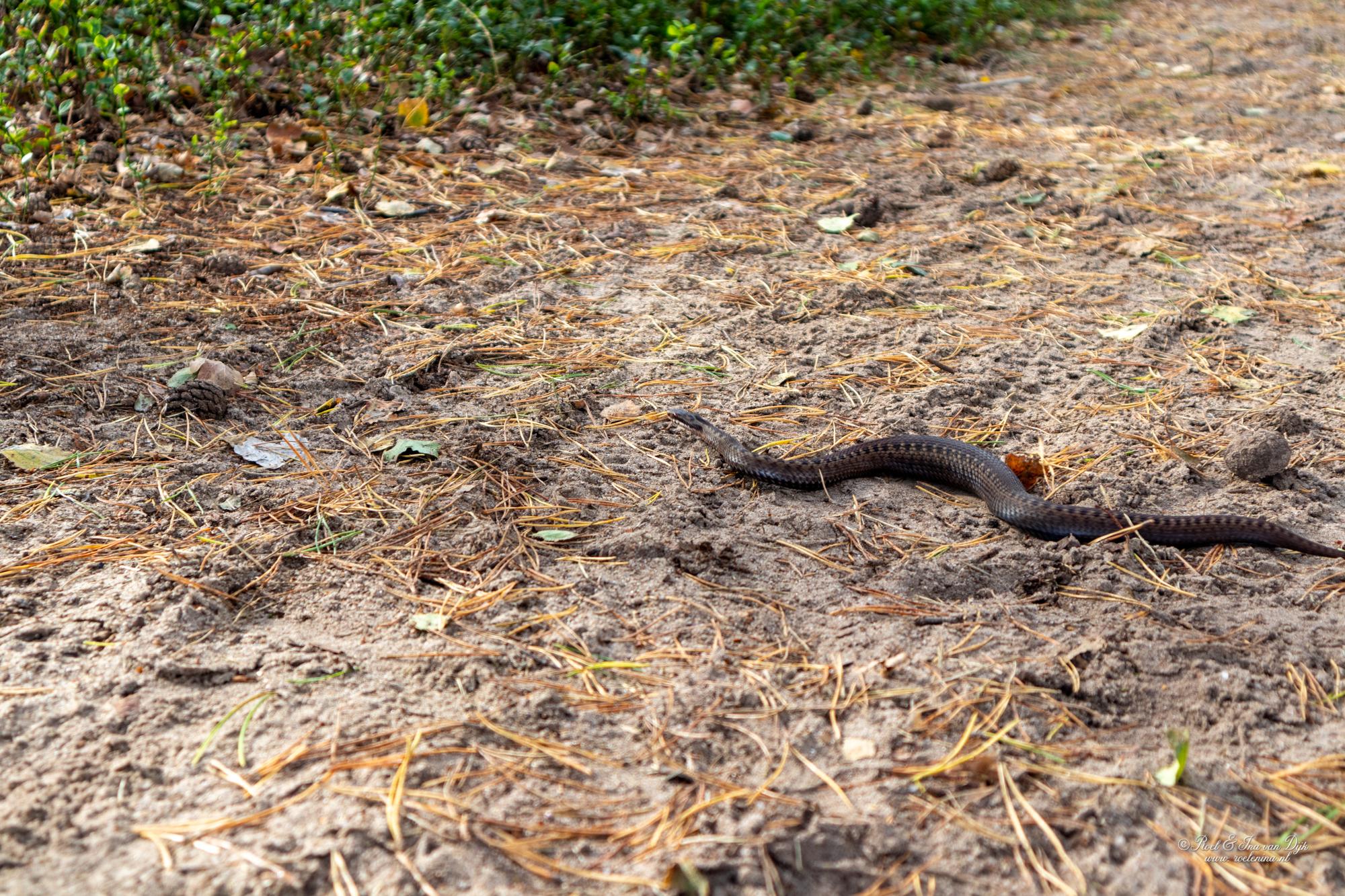 een gladde slang